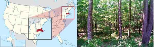 le Massachussetts est une région recouverte à 60% de forêts et de terres agricoles (10%)