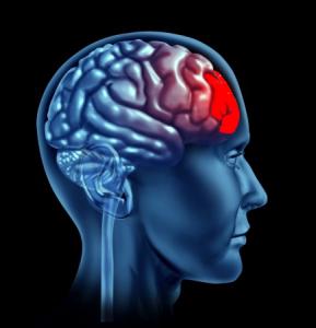 Le cortex préfrontal régule et contrôle les comportements émotionnels
